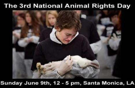 Third Annual National Animal Rights Day Sunday At Santa Monica Beach - Santa Monica Mirror | Plant Based Transitions | Scoop.it