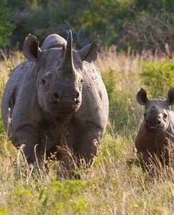 Arrested in Dec 2010! Four Kruger Park rhino poachers found guilty | What's Happening to Africa's Rhino? | Scoop.it