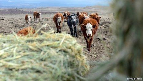 Beef's greater environment burden | Oven Fresh | Scoop.it