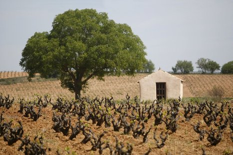 5 Spanish wines that rise to the occasion | Wijnnieuws | Scoop.it