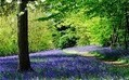 Where to see bluebells in 2012  - Telegraph | 100 Acre Wood | Scoop.it