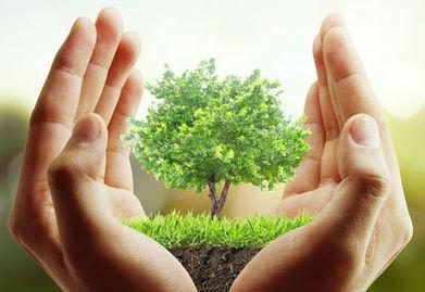 Jardins d'entreprises, une nouvelle mode ? | La Location de plantes | Scoop.it