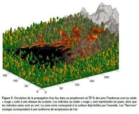 Impact du changement climatique sur les risques en forêt | EntomoNews | Scoop.it