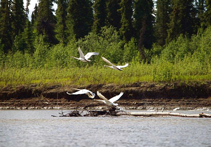 Gold Mine Planned for Southwest Alaska Threatens Environment and Local Communities   EcoWatch   Scoop.it