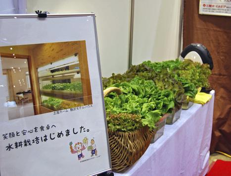 """Japón muestra sus casas """"inteligentes"""": ecológicas, económicas y saludables (+fotos)   Casa ecológica o autosuficiente.   Scoop.it"""