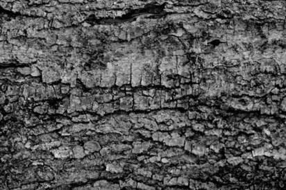 Black and White Bark Textures   The Official Photoshop Roadmap Journal   Scoop.it