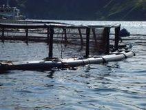 No More Environmental Impact Assessments for Salmon Farms in Nova Scotia - The Media Co-op | Nova Scotia Fishing | Scoop.it