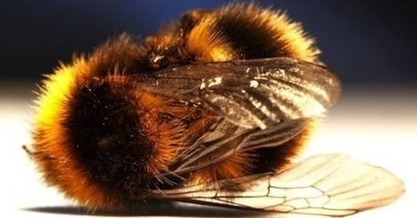 Bayer is suing a whole continent for saving the bees? | Global resource plunder and poisoning of natural resources | Scoop.it