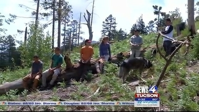 UA researchers study future forest landscape after Aspen fire | KVOA (TV-Channel 4, Tucson | CALS in the News | Scoop.it