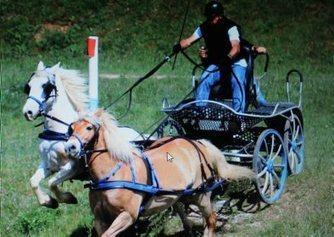 L'Attelage Tarnais sera  au Salon du cheval | Salon du Cheval | Scoop.it