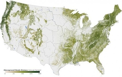 Amazing map offers an inventory of all the trees in the US - Geek | GIS, Spatial modelling & Plants | Scoop.it