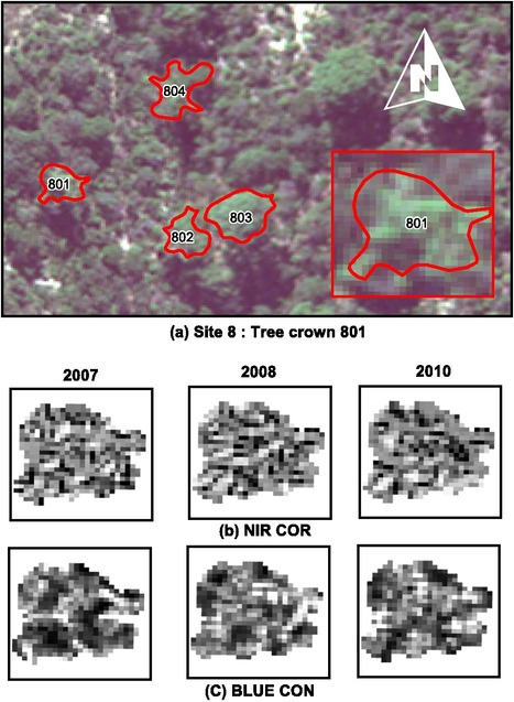 SPIE | Journal of Applied Remote Sensing | Enhancing a eucalypt crown condition indicator driven by high spatial and spectral resolution remote sensing imagery | Remote Sensing - Vegetation Classification & Condition | Scoop.it