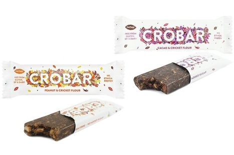 Insect protein bars available at 15% discount | Entomophagy: Edible Insects and the Future of Food | Scoop.it