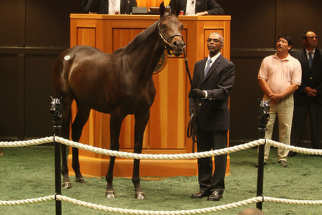 Fasig-Tipton Saratoga Sale Signals Confidence | Horseback Riding | Scoop.it
