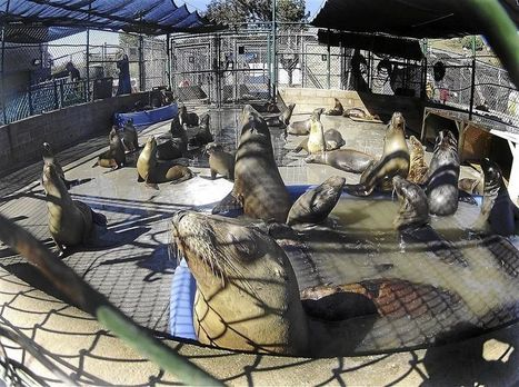 Haven for sea lions - The Star Online | Environmental Education - Domoic Acid | Scoop.it