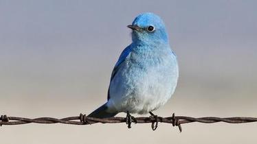 10 curiosidades que deberías saber sobre twitter | EcoListas | IncluTICs | Scoop.it