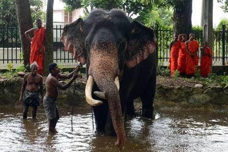 Baby elephants become latest status symbol among Sri Lanka's rich   The Japan Times   Articles   Scoop.it