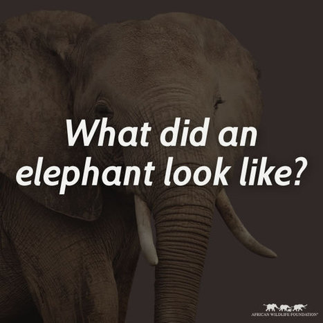 What did an elephant look like? – AWF | wildlife | Scoop.it