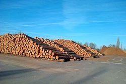 La filière bois se résout à un check up complet | Filière bois : Filière d'avenir | Scoop.it