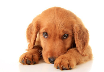 Stop Struggling When It Comes To Training Your Dog Now   Customer acquisition   Scoop.it