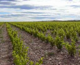 Buenas prácticas agrícolas | iRiego | Scoop.it