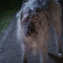 Un chien abandonné chante qu'il va survivre… (Vidéo du jour) | CaniCatNews-actualité | Scoop.it