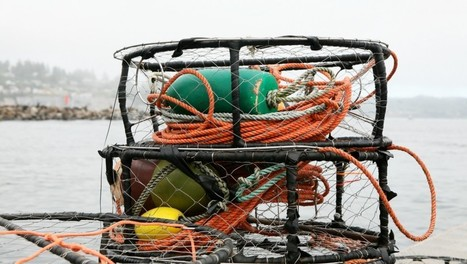 Huge Toxic Algal Bloom Shuts Down West Coast Fisheries   Global Aquaculture News & Events   Scoop.it