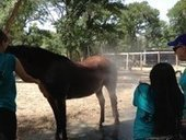 Children and horses help each other heal - WCNC | horses | Scoop.it