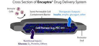 Encapsulated Cell Therapy forType 1 Diabetes | Zientzia | Scoop.it