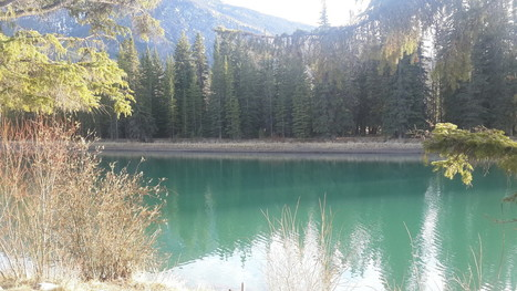 Reviewing the ROER4D Workshop in Banff | Opening up education | Scoop.it