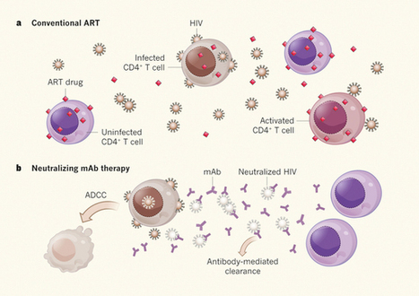 HIV: Antibodies advance the search for a cure | Virology News | Scoop.it