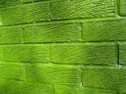 Frische Farbe – Grün steigert die Kreativität   Kreativitätsdenken   Scoop.it