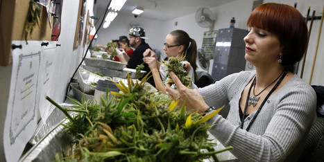 Are Marijuana Dispensaries Selling Out? | Jaylen Purnell Current Events | Scoop.it