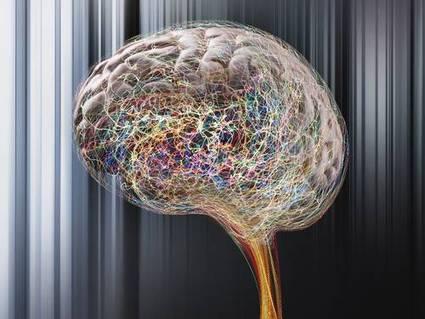 Quebra de hierarquia no cérebro | Science & Technology Topics | Scoop.it