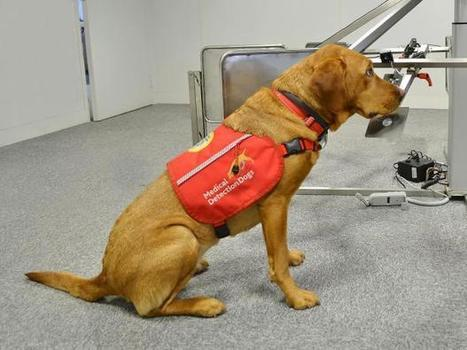 Dogs may be able to smell malaria in humans | Modern dog training methods and dog behavior | Scoop.it