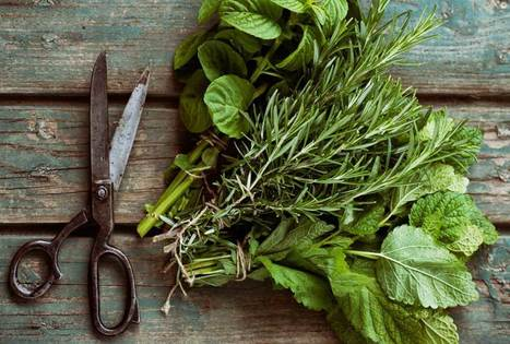 How to Harvest and Dry Herbs - Modern Farmer | Living On Mother Earth: Permaculture, Organic Gardening & Farming, Homesteading, Tools & Implements | Scoop.it