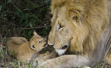 Who Are The Best (And Worst) Fathers In The Animal Kingdom? - World Science Festival | IELTS, ESP and CALL | Scoop.it