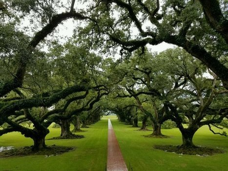 Tweet from @Rhonilynn3 | Oak Alley Plantation: Things to see! | Scoop.it