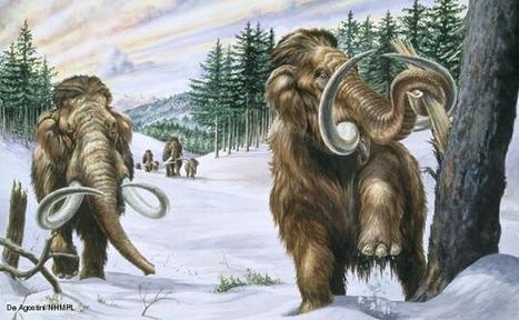 BBC Nature - Mammoths videos, news and facts | General Interest | Scoop.it
