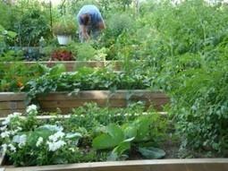 Détroit : l'agriculture urbaine, antidote à la désindustrialisation ? - Reporterre | Agriculture Urbaine | Scoop.it