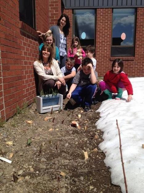 The daffodils and tulips for the #iearn project are growing at Jacquet River School in NB | How to Learn in 21st Century | Scoop.it