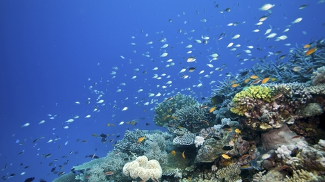 Our Once And Future Oceans: Taking Lessons From Earth's Past : NPR   Sustainable Futures   Scoop.it