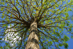 A licensed tree company in Kennesaw, GA - Aspen Tree Experts | Aspen Tree Experts | Scoop.it
