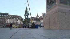 Le Grand Sapin de Noël se dresse place Kléber à Strasbourg - France 3   A voir et à savoir autour de chez moi   Scoop.it