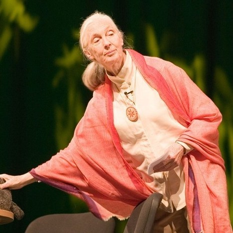 WOW. Jane Goodall launches online MOOC course  in digital mapping for communities (Wired UK) | Psychology of Media & Emerging Technologies | Scoop.it