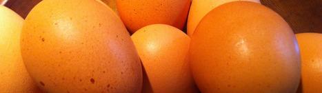 urban hens ottawa | Économie circulaire locale et résiliente pour nourrir la ville | Scoop.it