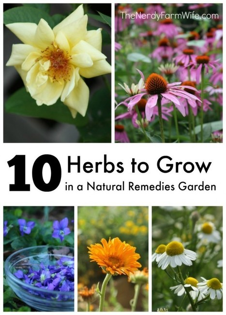 10 Herbs To Grow In A Natural Remedies Garden | Health & Fitness | Scoop.it
