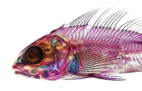 Wunderschöne präparierte Fische von Adam Summers | Amocean OceanScoops | Scoop.it