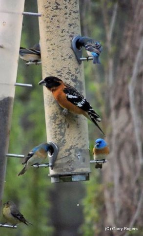 Birds Around Coldwater Farm | GarryRogers NatCon News | Scoop.it