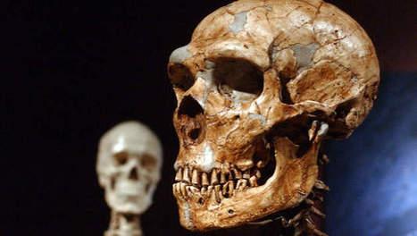 Er zit meer neanderthaler in je DNA dan je denkt | KAP_WalravensM | Scoop.it